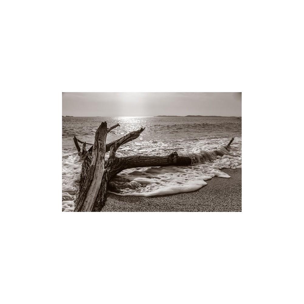Bois flotté entre terre et mer